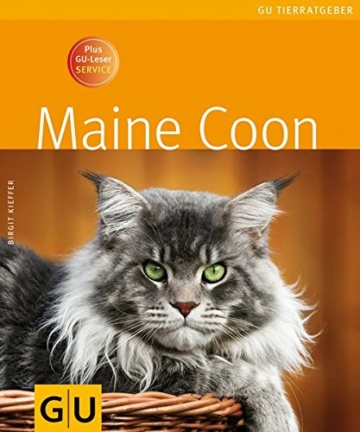 Maine Coon -